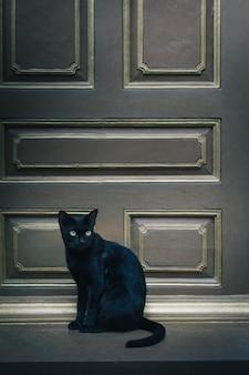 De zwarte kat zit op de deur en kijkt uit