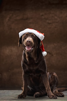 De zwarte labrador retriever zitten met geschenken op kerst kerstmuts