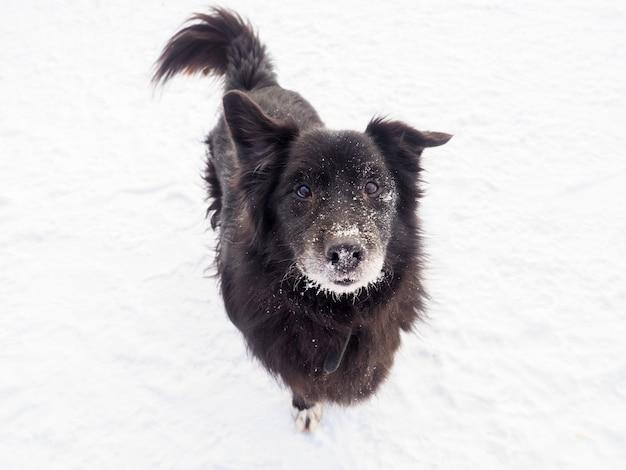 De zwarte verdwaalde hond die op straat zit
