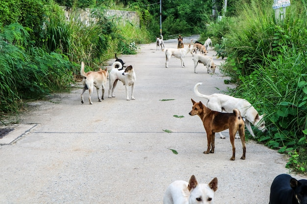 De zwerfhonden wachten op voedsel van de mensen die door de wildernis zijn gegaan