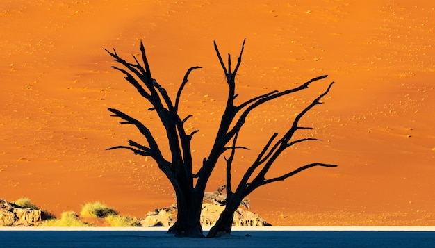 Deadvlei in namib-naukluft nationaal park sossusvlei in namibië - dead camelthorn trees tegen oranje zandduinen met blauwe hemel.