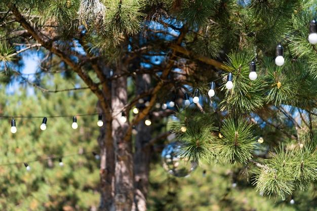 Decoratie voor een buitenfeest. een krans van gloeilampen die tussen de bomen hangen.