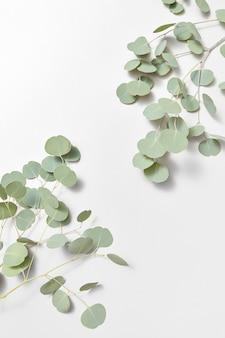 Decoratief hoekkader van groenblijvende verse natuurlijke takken van eucalyptusplant op een lichtgrijze muur, kopieer ruimte.
