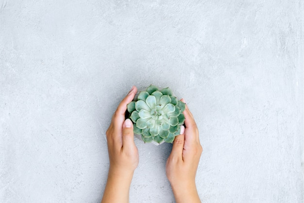 Decoratief of kamerplant in handen van de persoon