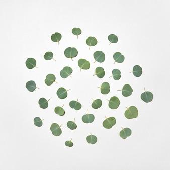 Decoratief rond patroon met groenblijvende verse natuurlijke bladeren van eucalyptusplant op een lichtgrijze muur, kopieer ruimte.