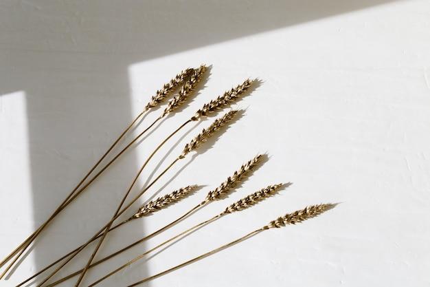 Decoratieve aren van tarwe goud gekleurd op licht. gouden geverfde oren metaalkleurig. creatieve lay-out met kopie ruimte. rijke oogst concept. plat leggen. bovenaanzicht.