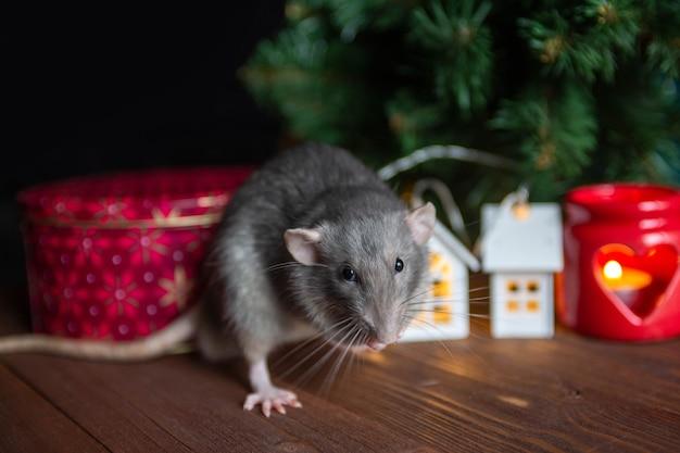 Decoratieve binnenlandse rat zit in de buurt van een kerstboom