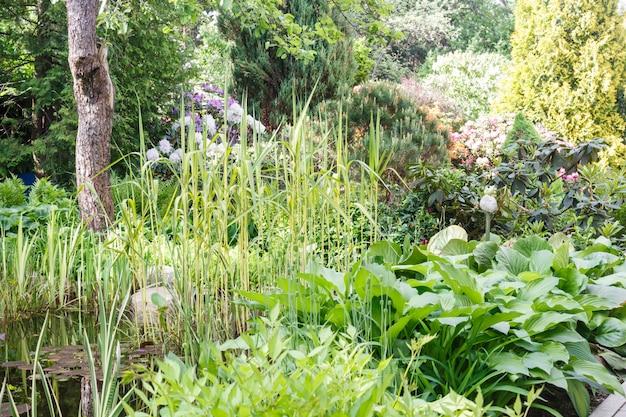 Decoratieve bomen. struiken en bloemen in de tuin: sparren, arborvitae, dennen, sparren, jeneverbes.
