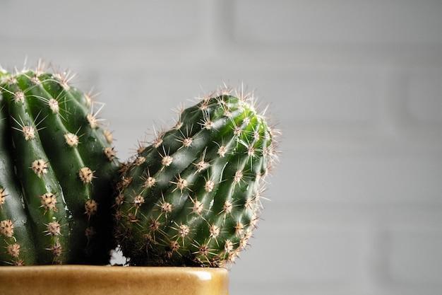 Decoratieve cactus, succulente ingemaakte minimalistische huisdecoratie