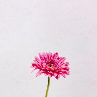 Decoratieve kleurrijke bloemen
