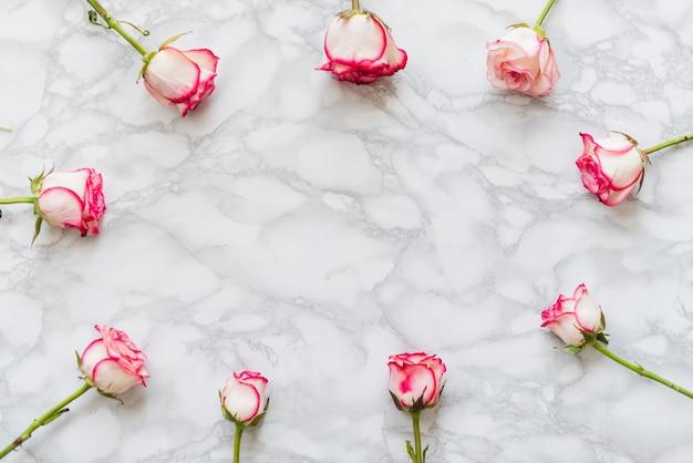 Decoratieve kleurrijke rozen op een achtergrond