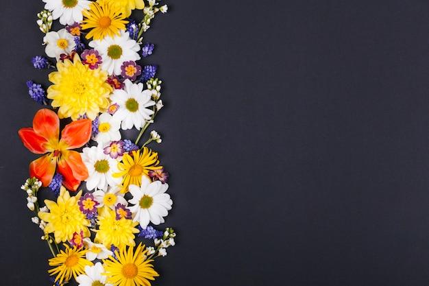 Decoratieve madeliefjebloemen