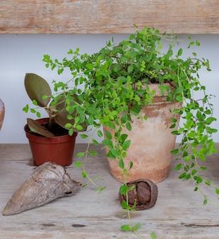 Decoratieve plant in een aarden pot en decoratieve elementen op een houten bankje.