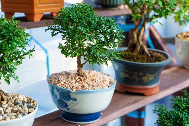 Decoratieve planten voor het versieren van een kamer in een straatmarkt in azië