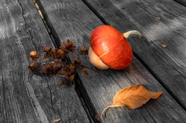 Decoratieve pompoen en een gedroogde takje hop humulus voor ontwerp rond het thema herfst, oogst