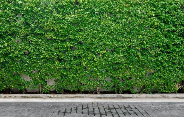 Decoratieve tuin op een baksteen