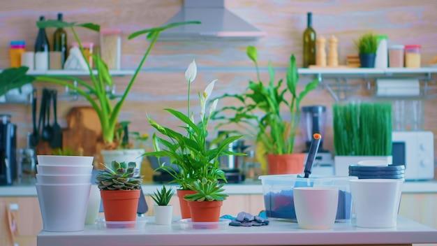 Decoreren met kamerplanten op keukentafel. met behulp van vruchtbare grond met schop in pot, witte keramische bloempot en bloemkamerplanten voorbereid om thuis te planten, tuinieren voor huisdecoratie