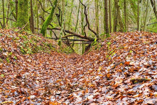 Deep forest-wandelpad herfst bospadscène
