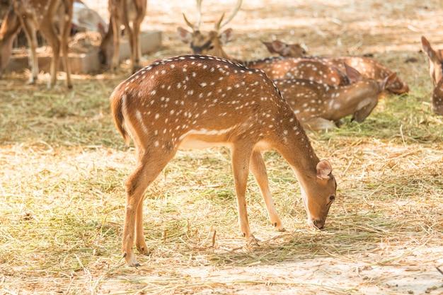 Deers in dierentuin sluiten omhoog