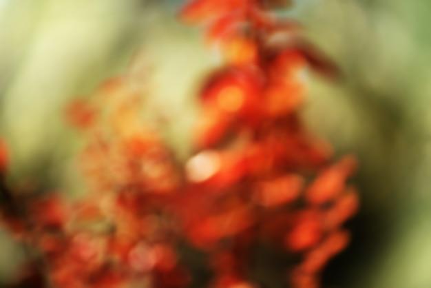 Defocus wazig herfst natuurlijke achtergrond van rood gebladerte en groene bladeren als bokeh. herfst concept.