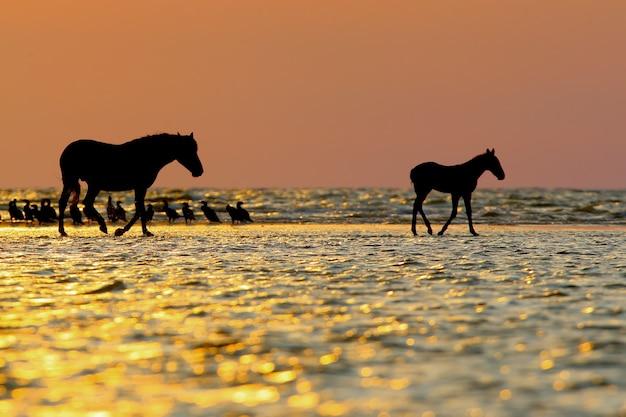 Delicaat roze ochtendlicht en silhouetten van dieren.