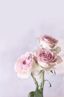 Delicate roze rozen in vintage, shabby chic