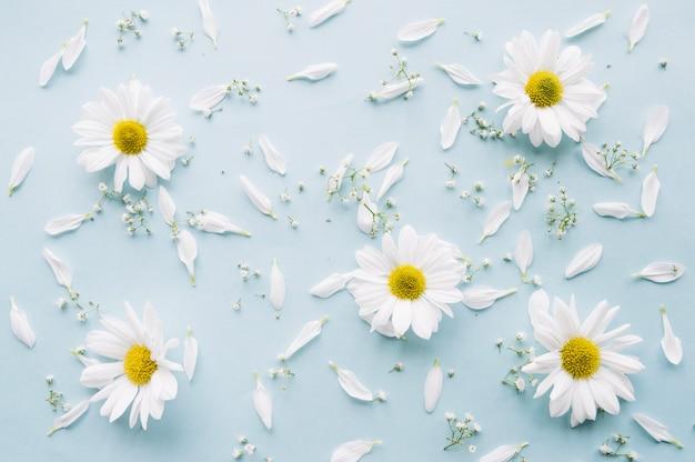 Delicate samenstelling van madeliefjes, baby adembloemen en witte bloemblaadjes op een lichtblauw oppervlak