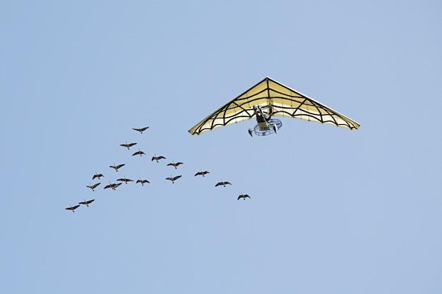 Deltavlieger die naast grauwe gans vliegt