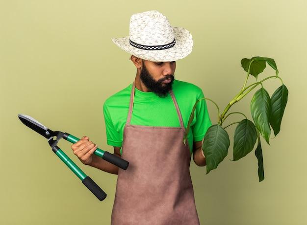 Denkende jonge tuinman afro-amerikaanse man met een tuinhoed die plant vasthoudt met tondeuses geïsoleerd op olijfgroene muur