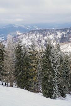 Dennenbomen in de bergen