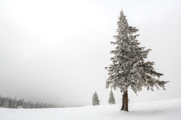 Dennenboom bedekt met vorst in diepe heldere sneeuw