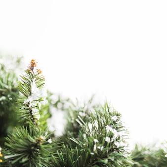Dennenboom met sneeuwvlokken op takken