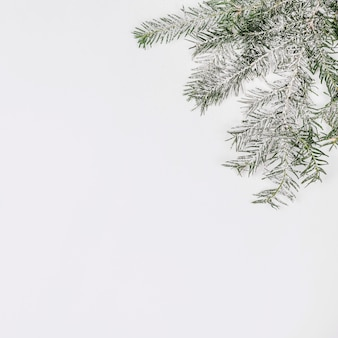Dennenboomtak met sneeuw wordt behandeld die