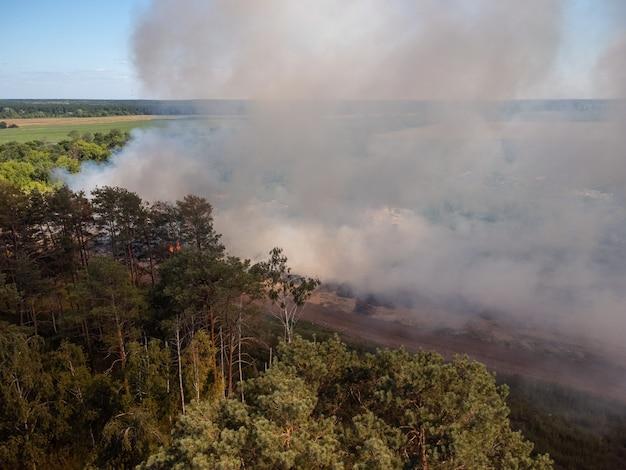 Dennenbos in de buurt van brandende vuilnisbelt aangetast door vuur en rook. ecologisch probleem
