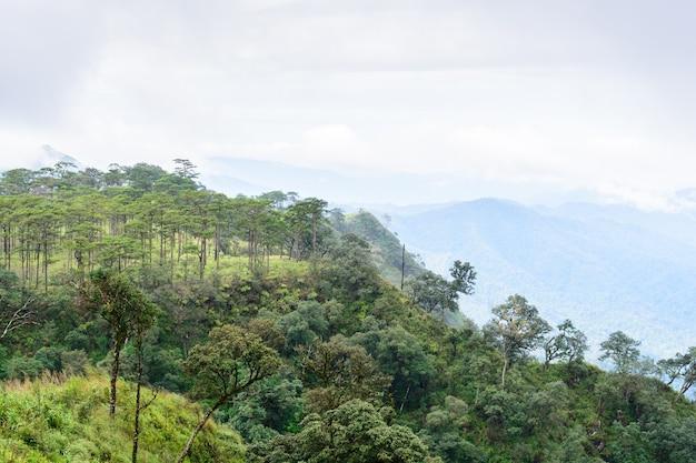 Dennenbos in de ochtend op phu soi dao national park, uttaradit-provincie, thailand