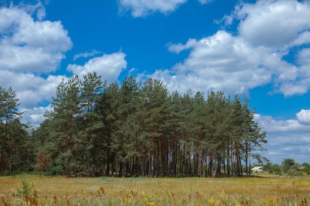 Dennenbos onder diepe blauwe hemel in berg karpaten