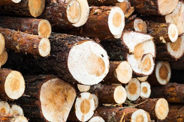 Dennenhout oogsten in het bos. logboeken dicht gestapeld