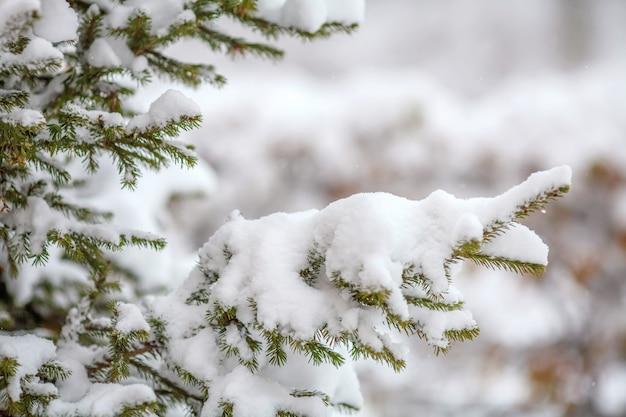 Dennentakken bedekt met verse sneeuw, vallende sneeuwvlokken, wintermuur