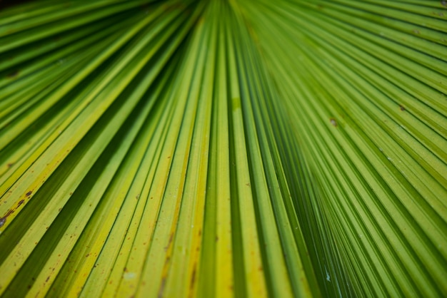 Detail close park groen textuur