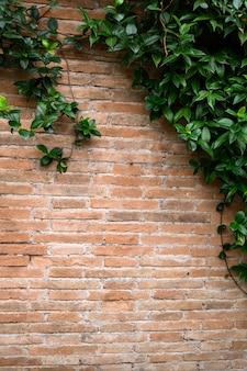 Detail van baksteen rode muur met decoratieve bogen en groeiende plant