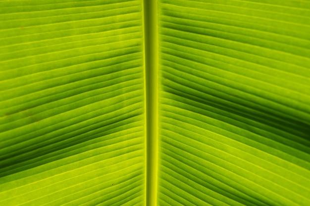 Detail van bananenblad achtergrond