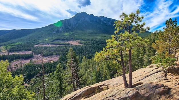 Detail van boomgroei in rots met bergen op de achtergrond