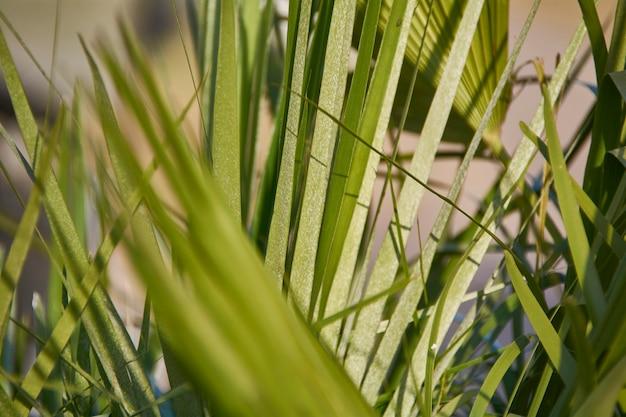 Detail van de toppen van de bladeren van een palmboom onder het licht van de ondergaande zon