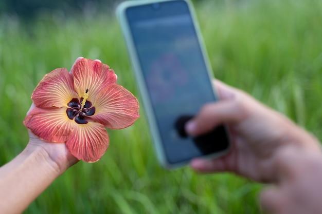 Detail van een hand die een foto met de mobiele telefoon maakt naar een bloem die in de hand houdt