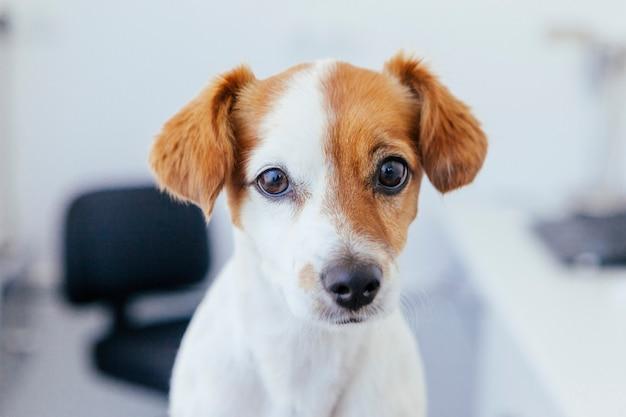 Detail van een hondsnuit en ogen