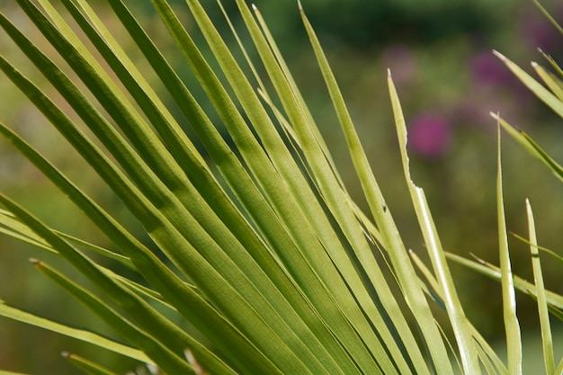 Detail van een palmblad op een groene achtergrond