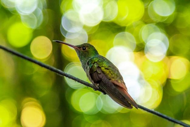 Detail van een prachtige kolibrie op lake yojoa. honduras