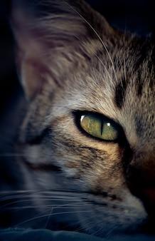 Detail van het oog van een kat met groene ogen