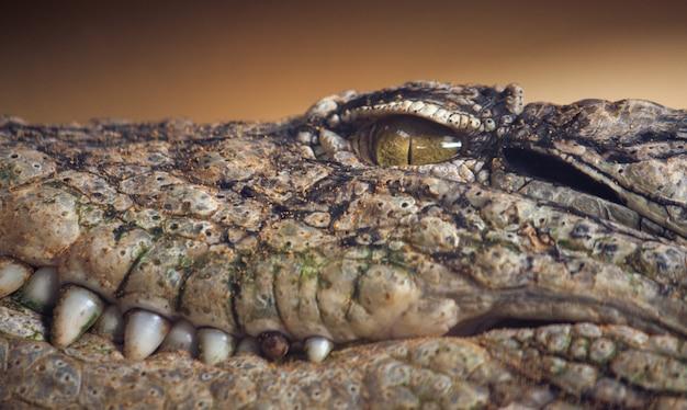 Detail van het oog van een krokodil het staren