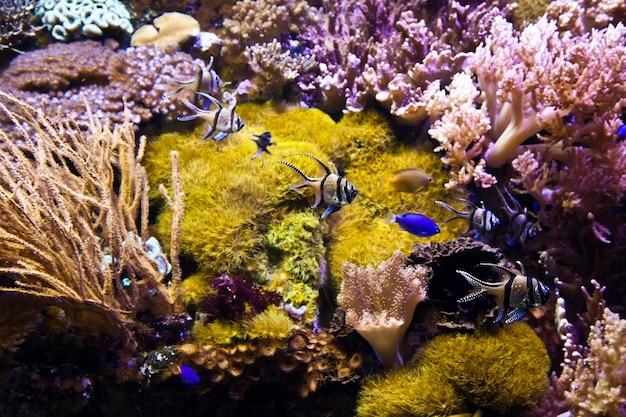 Detail van koraalrif: egypte, rode zee